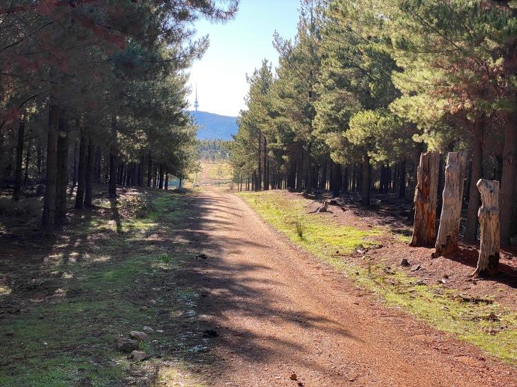 Arboretum approach, via Boundary Road