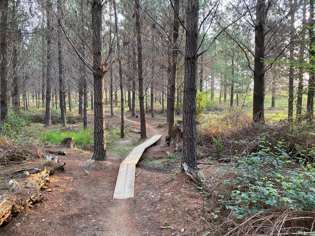 Zoo Pines